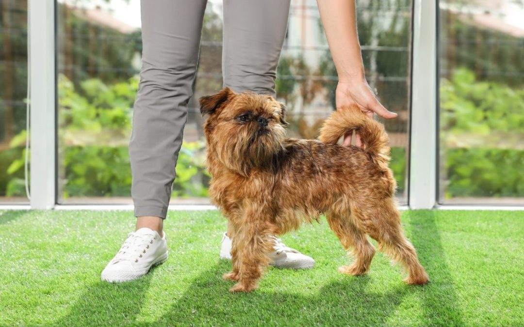 Enhance Pet Playtimes with the Best Quality Synthetic Grass in Tracy